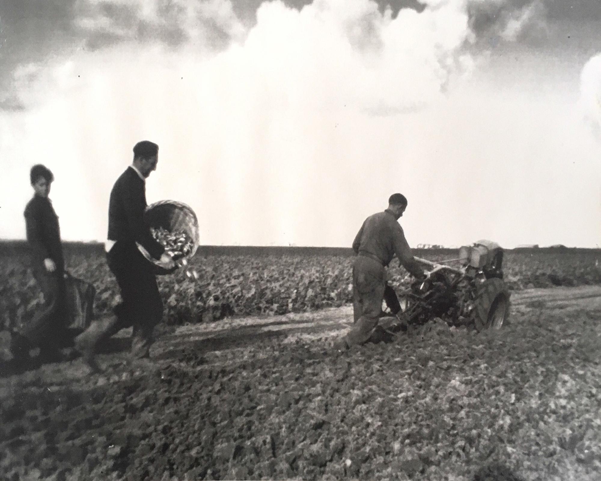 De pionieer, Wilhelmus Sr. planting.