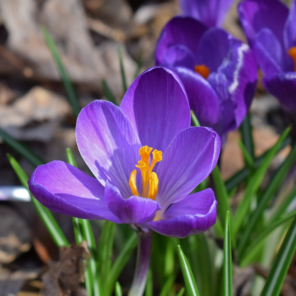 Assortiment - Flower Record